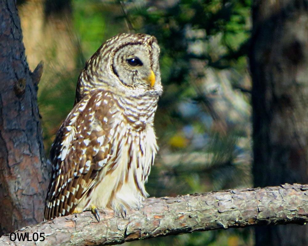 OWL05_webpage_IMG_4266.jpg