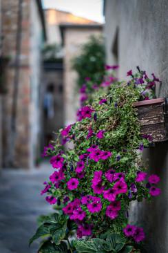 Beautiful street in Pienza
