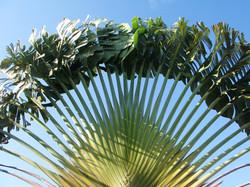 Grenada Horticulture Tours