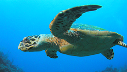swim with the turtles