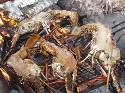 bbq plenty lobster