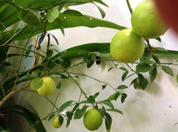help yourself to limes