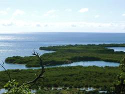 kayak in the mangroves