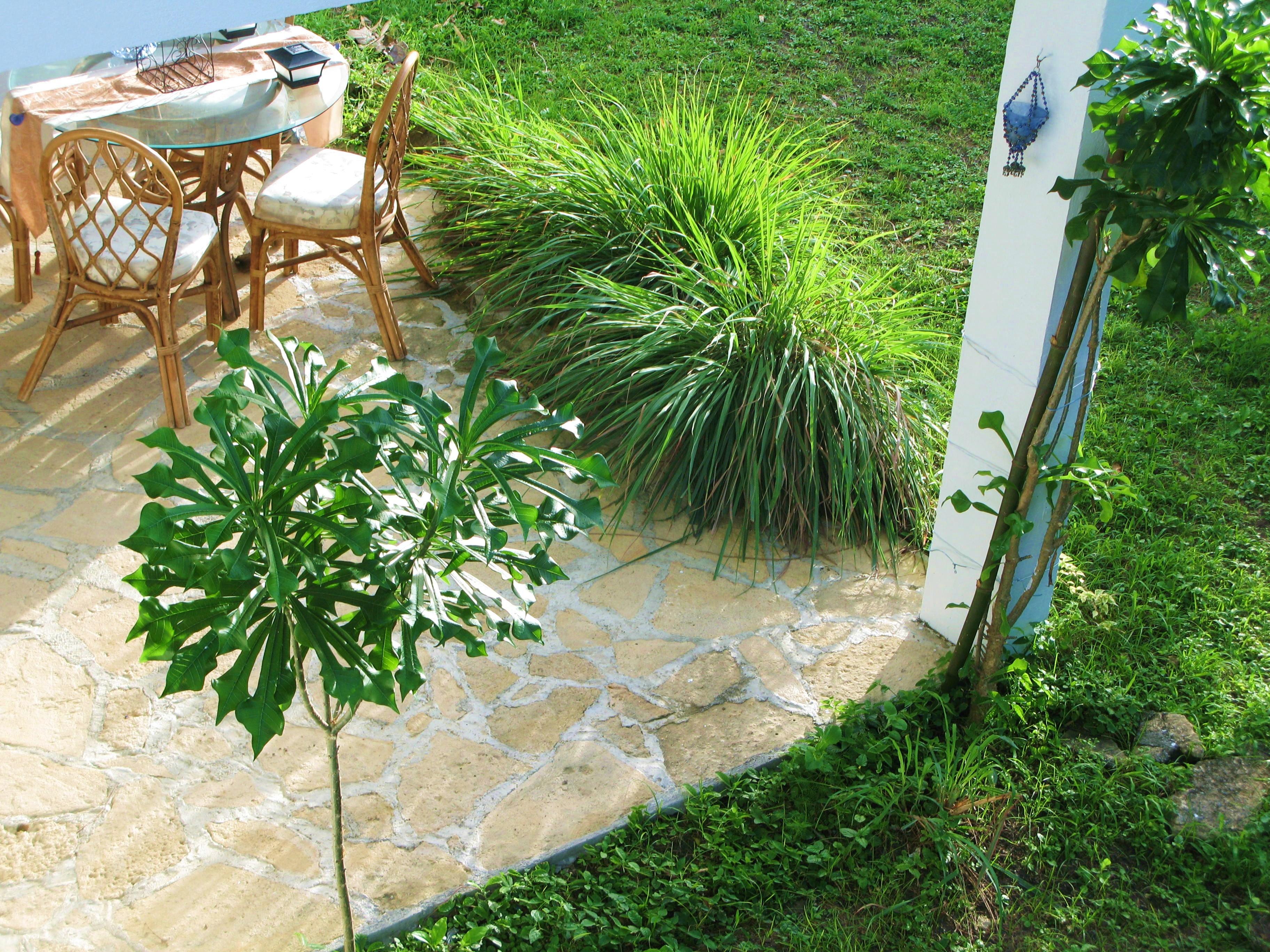 lemongrass hedge