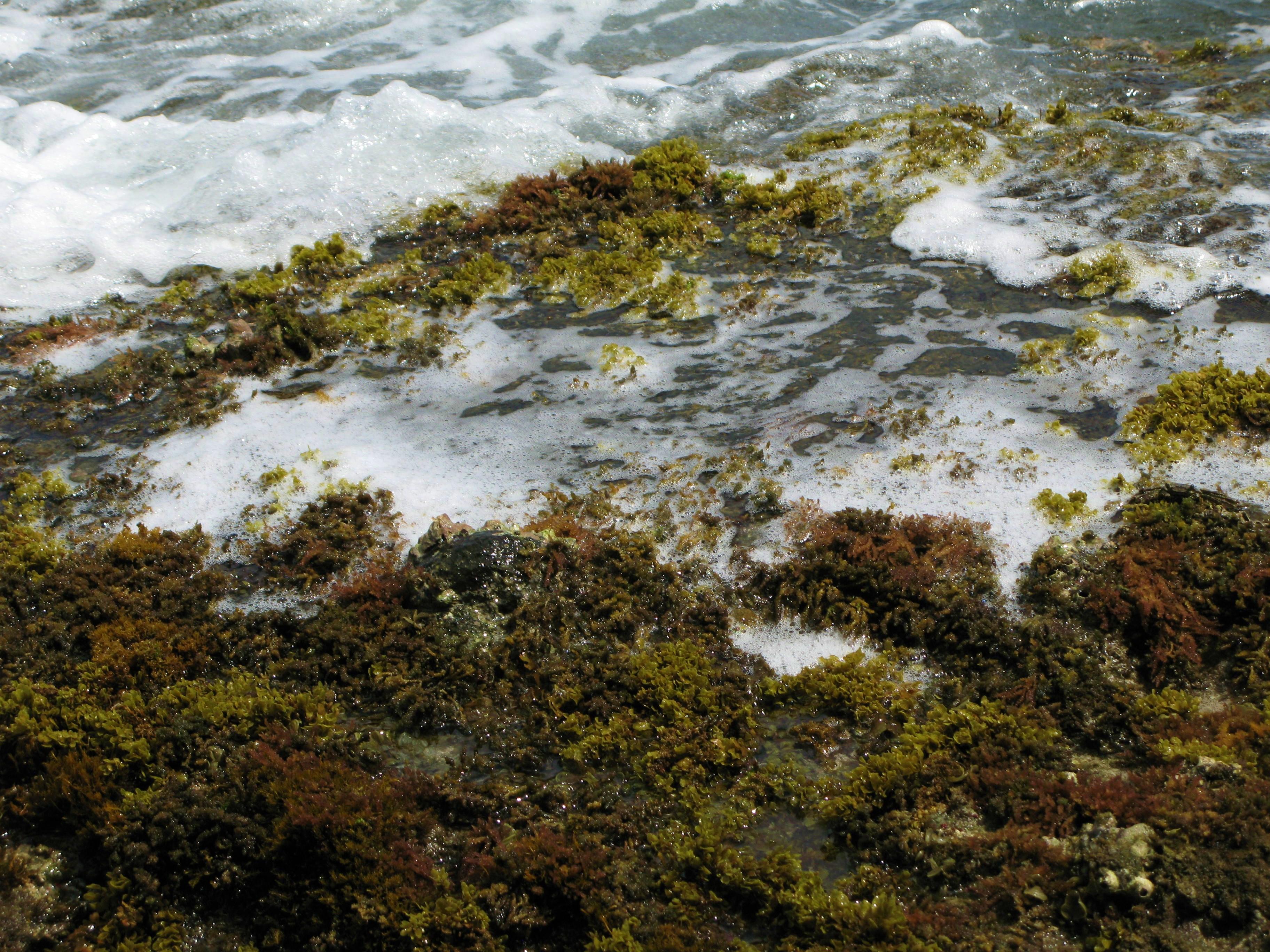 discovering marine life