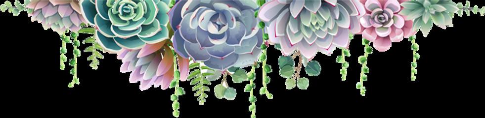 buy-succulents-bottom.png