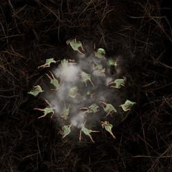 Le nid 3