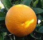 Vaniglia orange