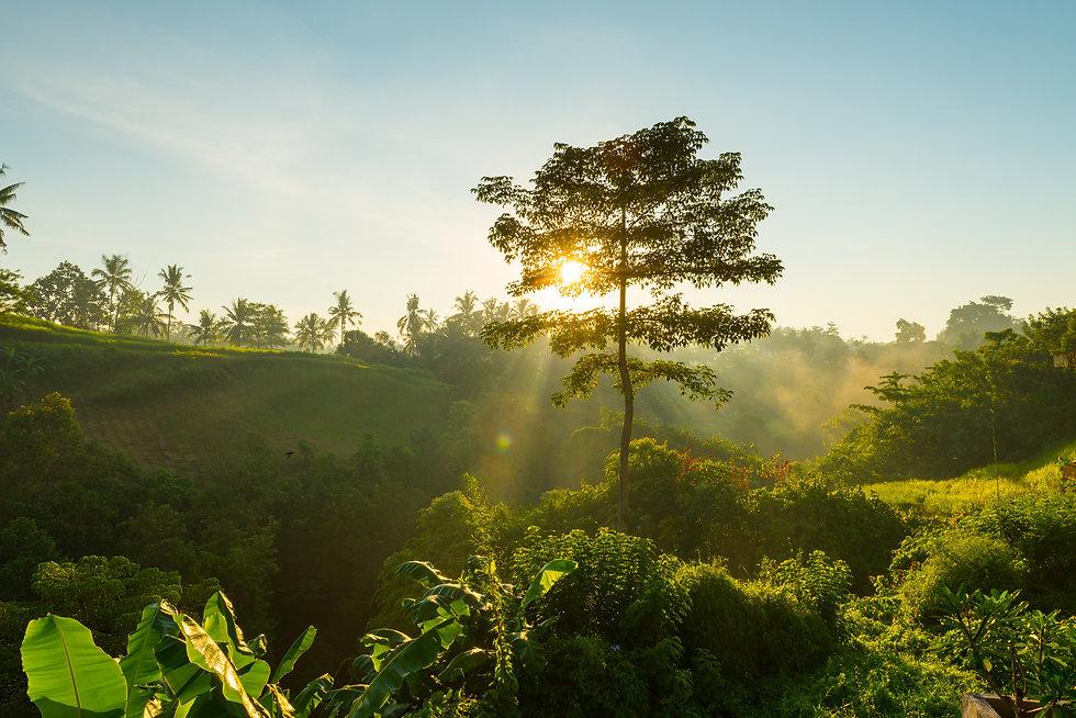 sunrise-bali-jungle.jpg