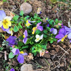 Mit neuen Pflanzen in den Frühling