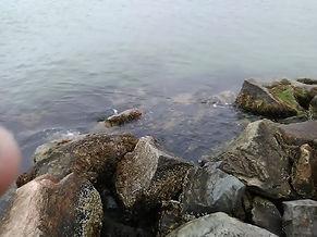 bass river 5.jpg