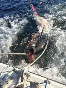 perfect catch 1.jpeg