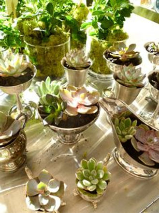 Mini Succulent Gardens - Wednesday May 29 - 6pm