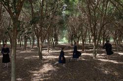 Girls_treegrove.png