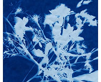 Jamiaha_Cyanotype_SMALLSQ.jpg