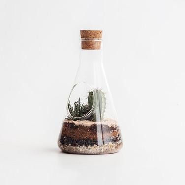 Chemistry Terrarium Kit