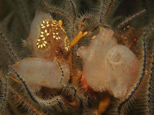 Marine Conservation Projects UK.jpg
