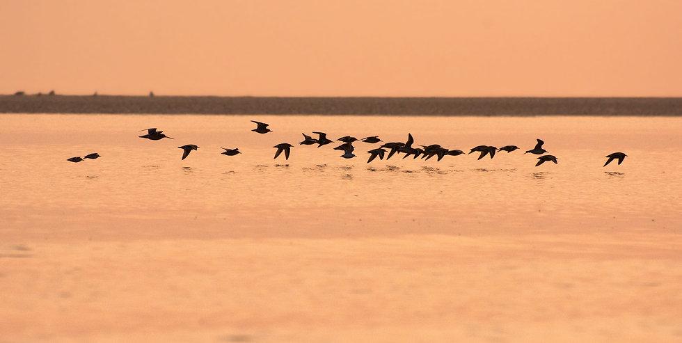 Wader Sunrise by Billy Chapman.jpg