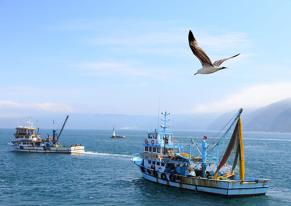 Sea-Changers Unsustainable Fishing.jpg