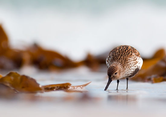 Marine Conservation Charity Seaside Sip by Nigel Spencer.jpg
