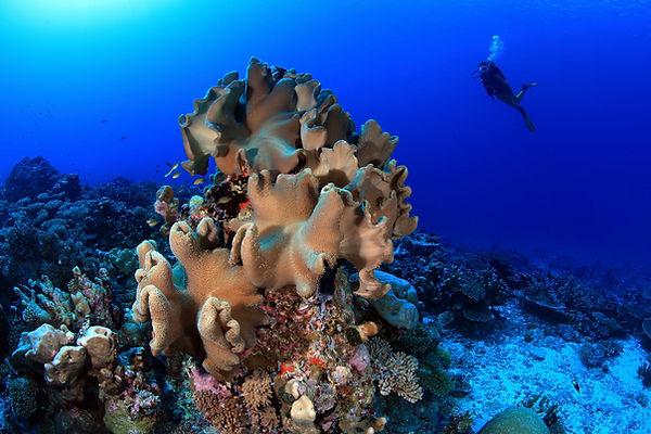 Sea-Changers Climate Change.jpg