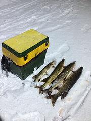 Рыбалка на Селигере на жерлицы. Дом рыба