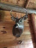 Deer head mounted.jpg
