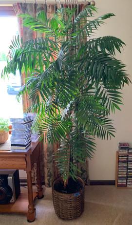 Palm tree.jfif