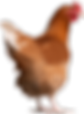 5-chicken-png-image.png