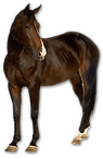 7-horse-png-image.png