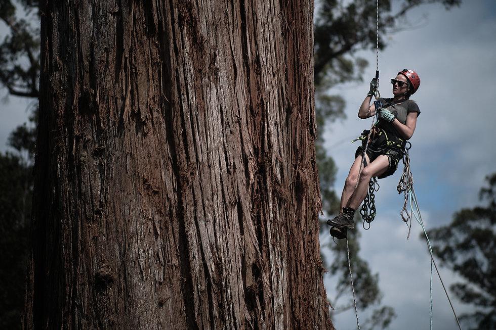 WILD THINGS Dr Lisa Searle tree climber