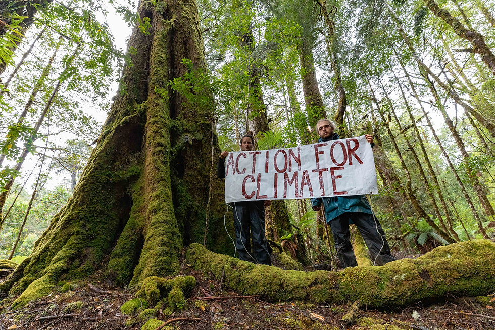WILD THINGS Forest protesters c.Dan Brou