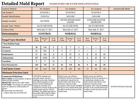 Mold Report