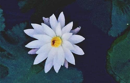 Yoga Nidra - White Lotus Flower