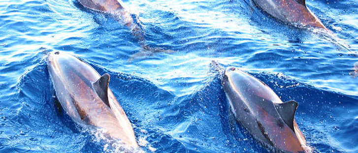 1-Day Swim With The Dolphins in St. Augustine