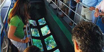 key-west-glass-bottom-boat-tour-with-sun
