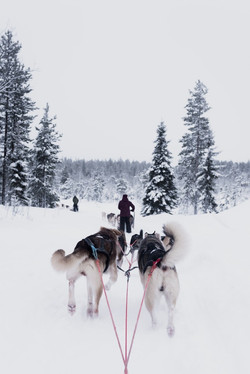Go sledding with a team of sled-dogs