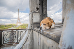 Honey on the rooftops of Paris