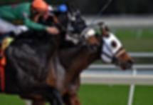 Prix de Diane horse race- Luxury Travel experience
