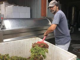 Wine Maker Paul