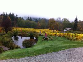Foggy day at the Vineyard!