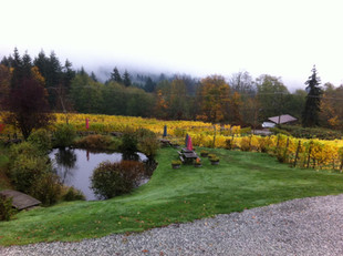 Foggy day at the Vineyard!