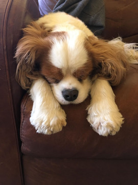 Sleepy Lawrence