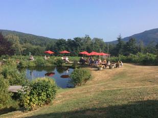 Summer day at the Vineyard
