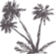 palms_all_in_one_003_38.png