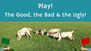 Dog Play! The Good, the Bad & the Ugly!