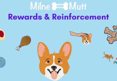 Rewards & Reinforcement