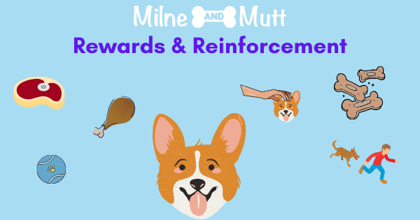 Find out what rewards your dog likes