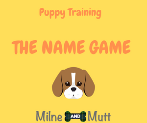 How to teach your puppy their name Puppy training