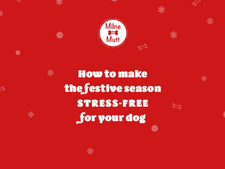 How To Make The Festive Season Stress Free For Your Dog